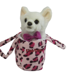 Hund Chihuahua i väska