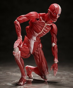 Human Anatomical Model Figma