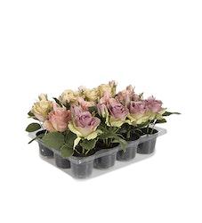 Blommor-Long lasting