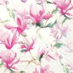 Servett Magnolia