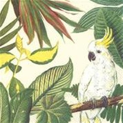 Servett Cockatoo IHR