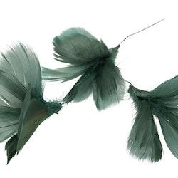 Fjäderblomma, mörk grönblå (12-pack)