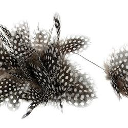 Fjäderblomma, pärlhöns (12-pack)
