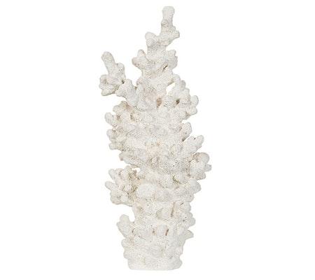Korall, vit
