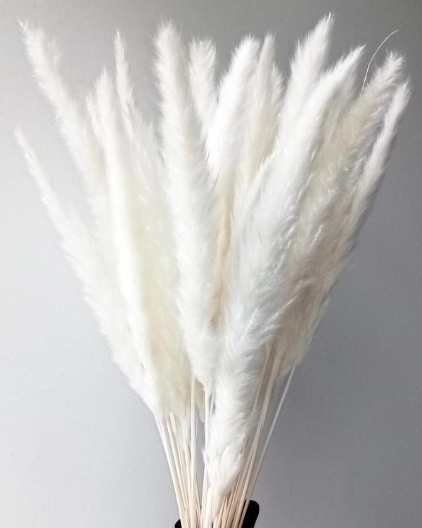 Mini Pampasgräs, blekt vit
