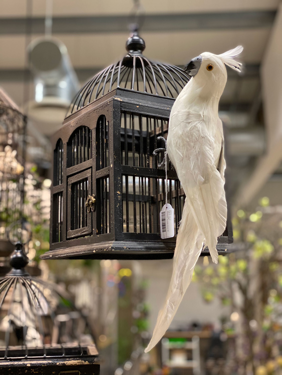 Papegoja vit sittande 50 cm