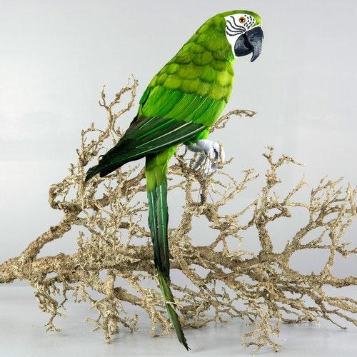 Papegoja Grön