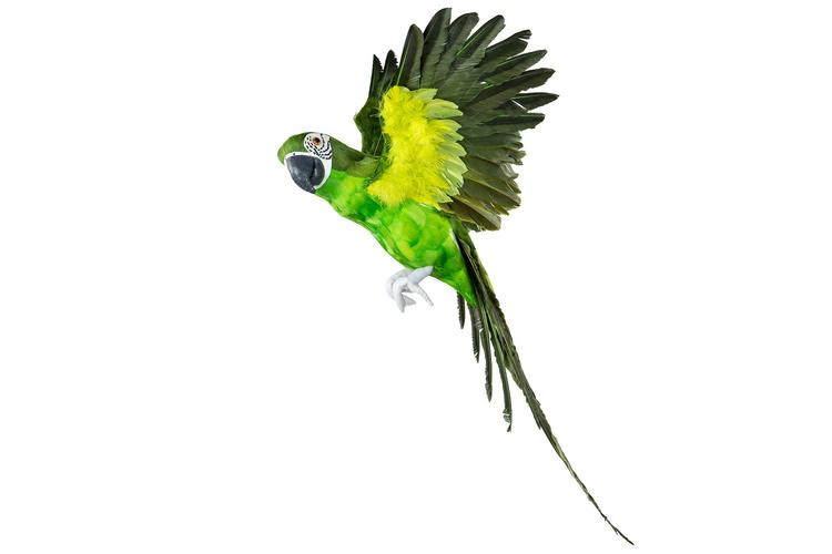 Papegoja Grön Flygande