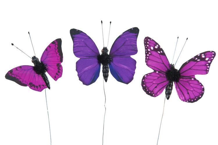 3 fjärilar