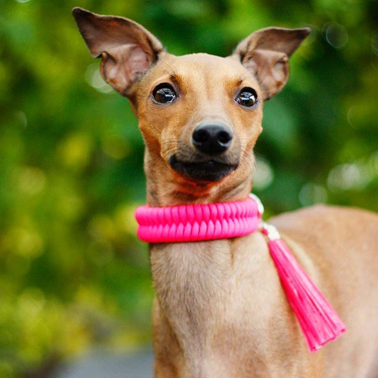 Neonrosa hundhalsband knutet för hand i paracord – en väldigt slitstark nylonlina. Modell: Inna, italiensk vinthund.