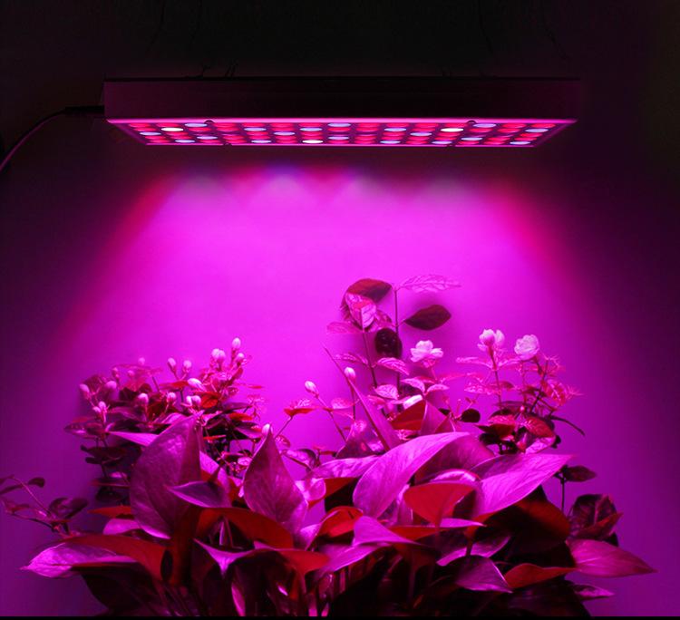 Växtlampa HL25