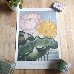Indisk lotus poster - 35x50 cm