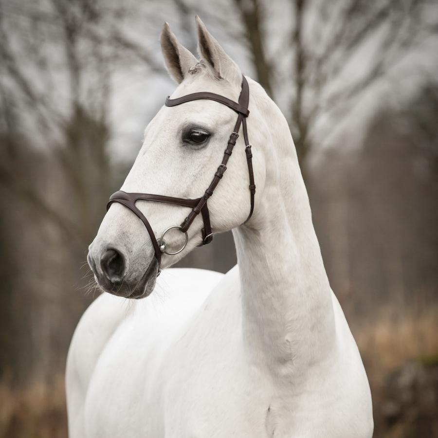 AL-Häst Ridsport