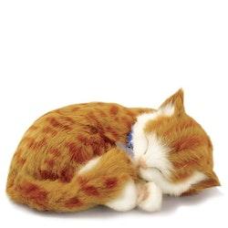 Kattunge röd