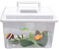 Bärbart akvarium