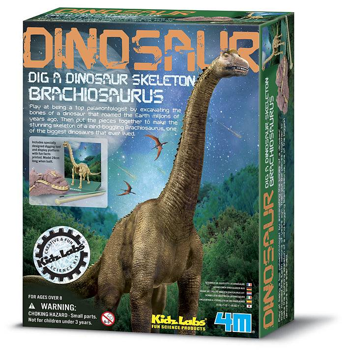 Brachiosaurus skelett