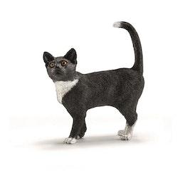 Katt svart vit