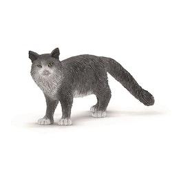 Katt grå