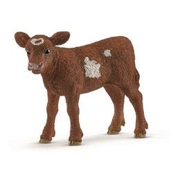 Texas Longhorn Kalv