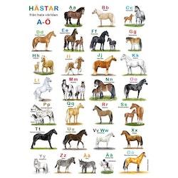 Hästar ABC affisch