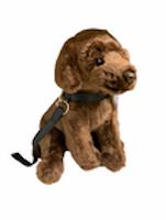 Labrador i koppel