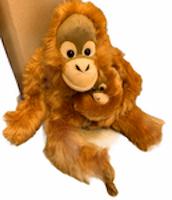 Apa Orangutang med unge