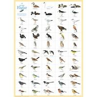 Svenska fåglar Affisch