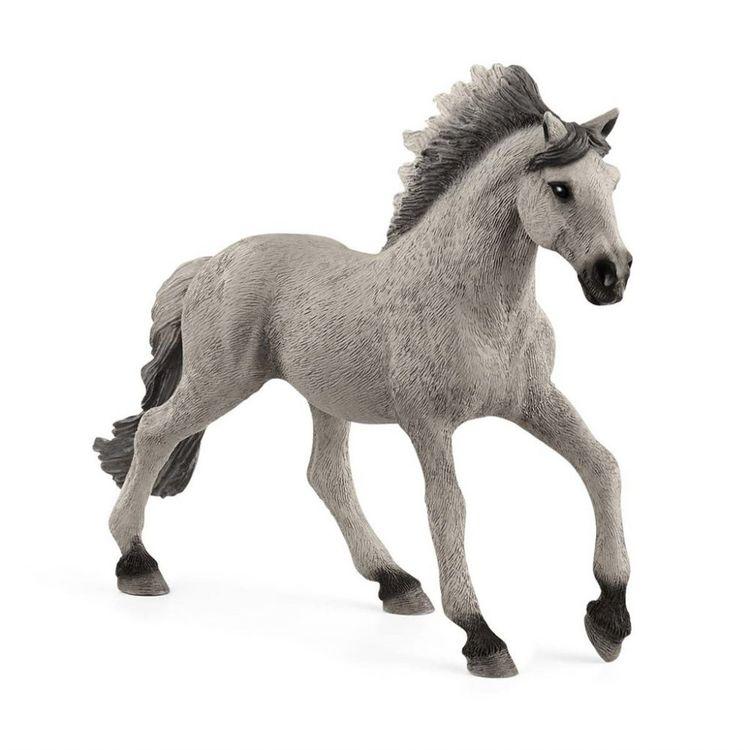 Sorraia Mustang Stallion