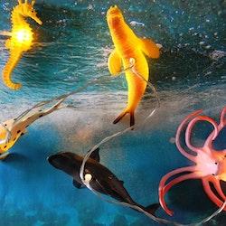 Ljusslinga- Sea Creatures