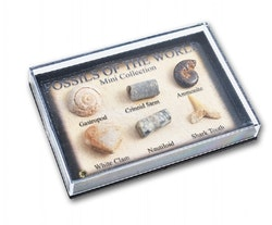 Små Fossiler i box