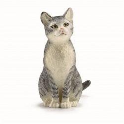 Katt sittande