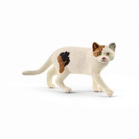 Katt korthårig amerikansk