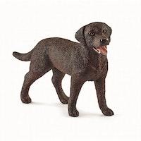 Labrador Retriever female