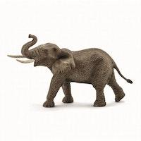 Afrikansk elefant - hane