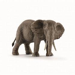Afrikansk elefant hona