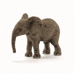Afrikansk elefant kalv