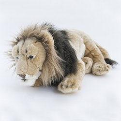 Lejon liggande