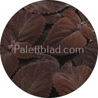 Premium Sun Dark Chocolate 5 frön