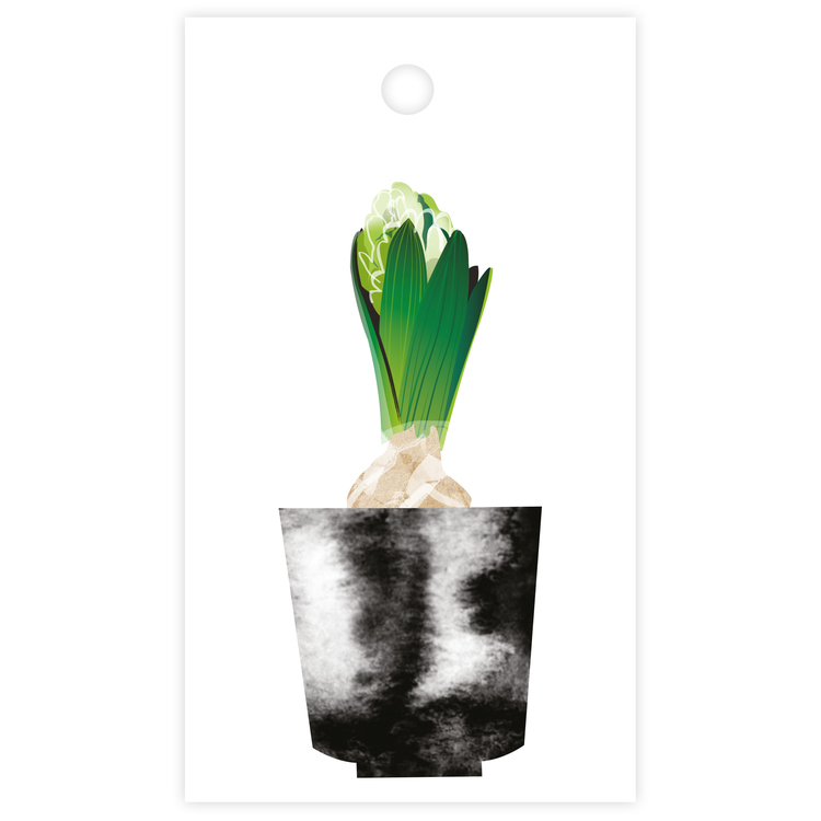 Litet kort - hyacint