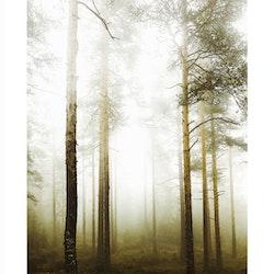 Skogsdimma #1