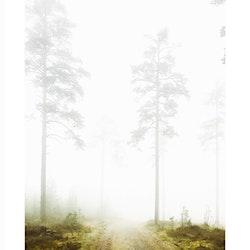 Skogsdimma #2