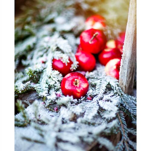 Vinteräpplen #1