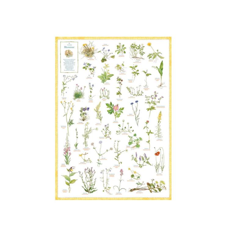 Affisch Svenska Blommor 50*70