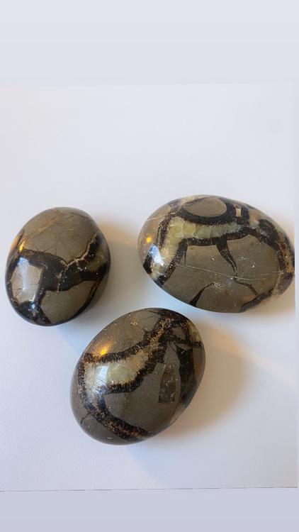 Septarian/Drakägg, palmstone (L)