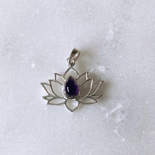 Lotus ametist, silverhänge