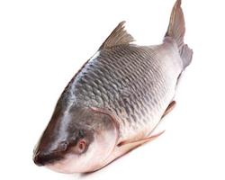 ROHU Fisk 2+ Kg