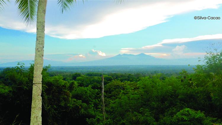Filippinerna - Auro Mana (1KG)