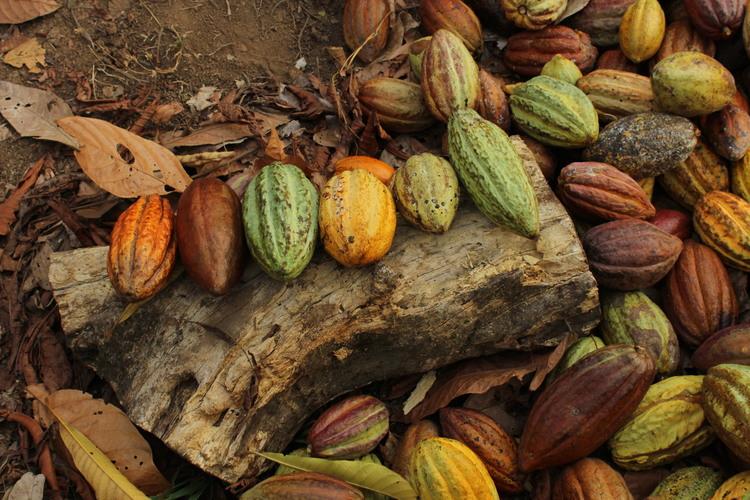 Nicaragua O'PAYO Organic (1KG)