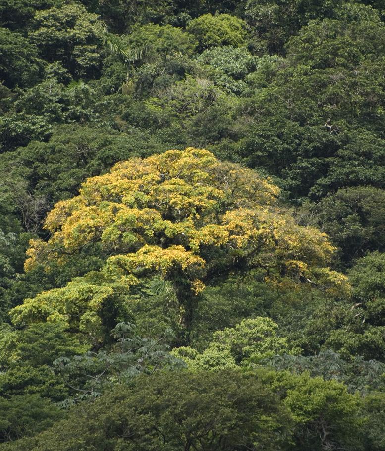 Costa Rica - Uplala Nahua