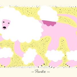 """""""Poodle"""""""